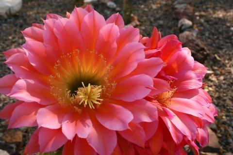 flower-close-ups-1