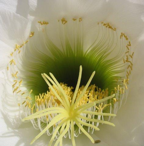 flower-close-ups