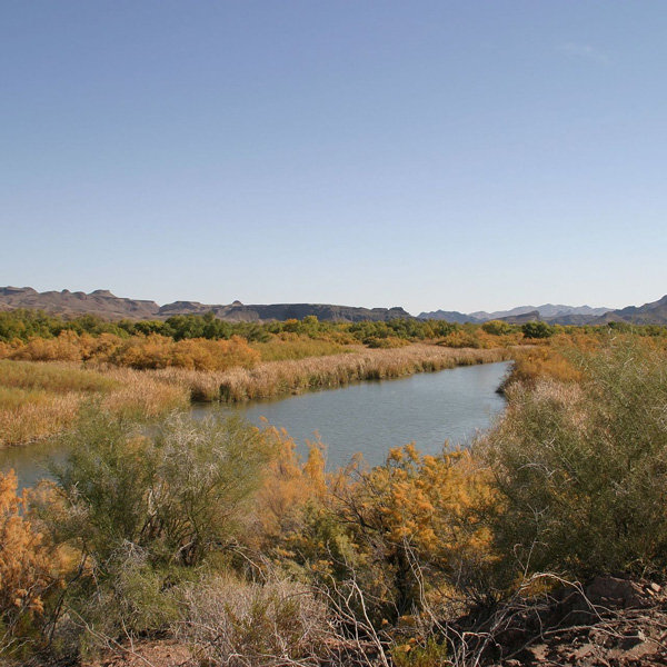 https-upload-wikimedia-orgwikipediacommonsthumb77bbill_williams_river_national_wildlife_refuge_2-jpg1920px-bill_williams_river_national_wildlife_refuge_2
