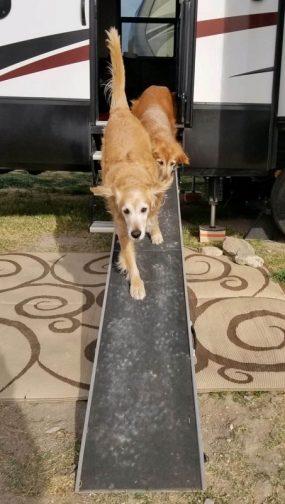Black Rock RV Village - Dog Ramp