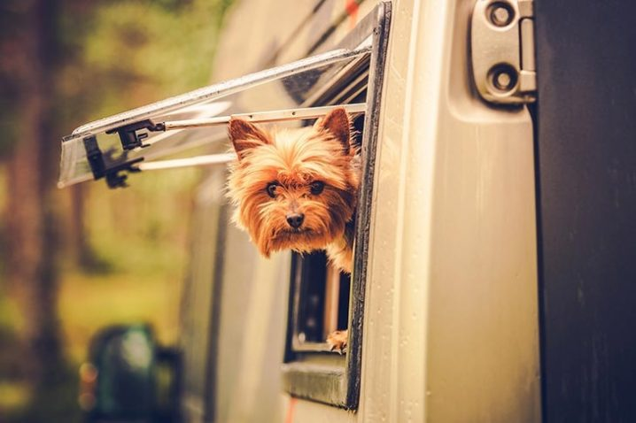 Black Rock RV Village - RVing with Your Dog